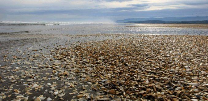 Pescadores de Chiloé denuncian negligencia en investigación sobre marea roja