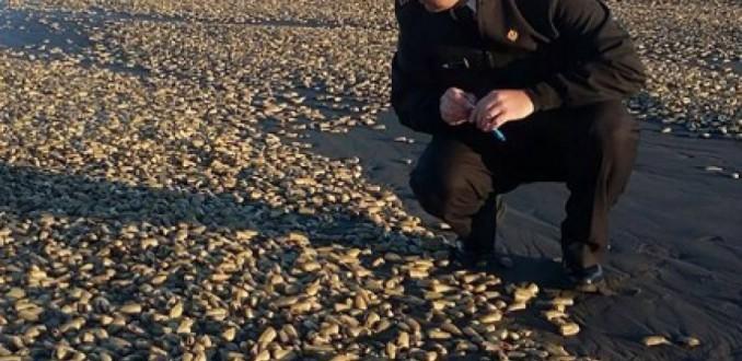 Chilotes denuncian abandono del Gobierno después de crisis por marea roja