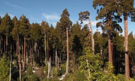 Ministerio de Medio Ambiente reforestará con bosque nativo tierras arrasadas por incendios