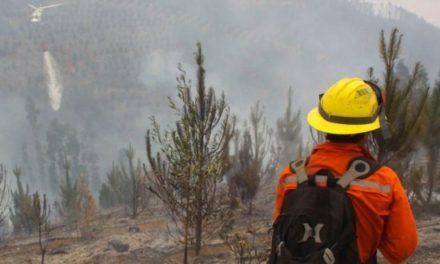 """PDI confisca documentación de Conaf por caso """"Cartel del Fuego"""""""