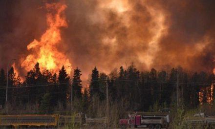 65 personas han sido formalizadas por incendios forestales