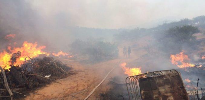 Incendio en Viña del Mar se acerca a zonas habitadas