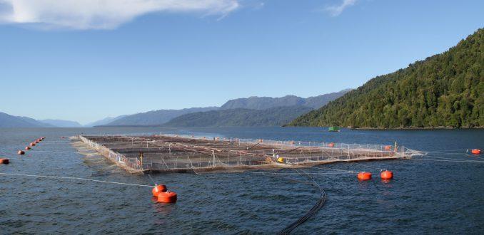 Industria salmonera: Expertos advierten impacto ambiental en uso de antibióticos