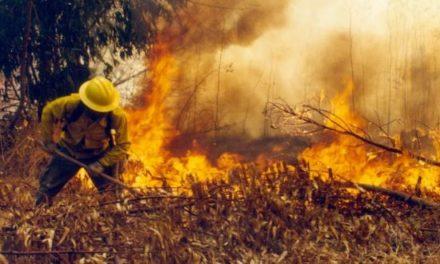 CGE cancela $150 millones a víctimas de incendios forestales en Pumanque