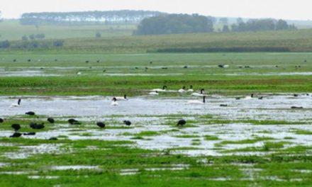 Diputados presentan proyecto de ley que protege humedales