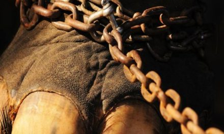 Senado mantiene animales en los circos y reabre debate sobre rodeo