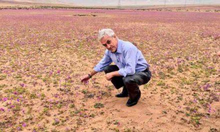 Piñera anuncia medidas proinversión y contra el medioambiente