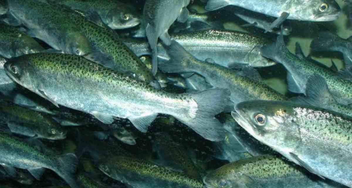 Bacteriófagos: una solución sustentable para las plagas en árboles y enfermedades del salmón