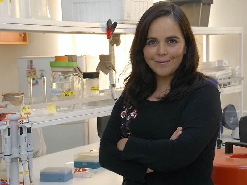 Células centinela: Académica U.de Chile avanza en investigación en inmunoterapia